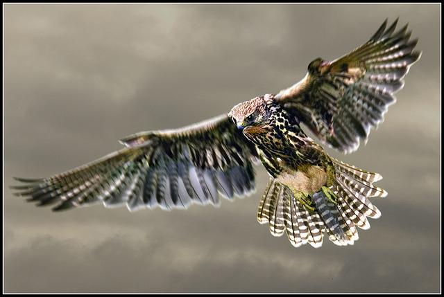 saker-falconetto-sacro-004