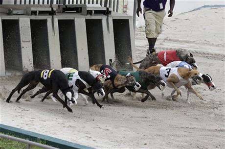 corse dei cani 001