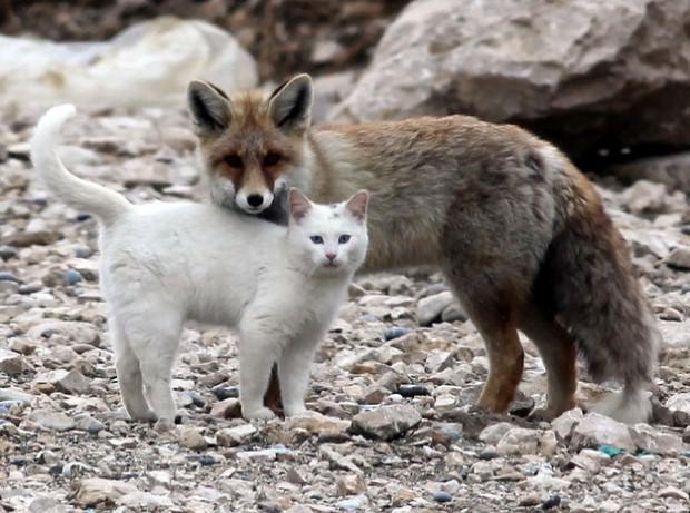 Gatto e Volpe 001