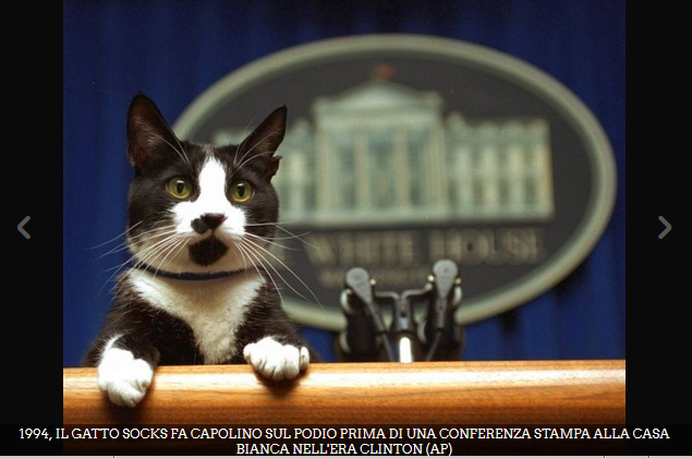 White House Gatto 001