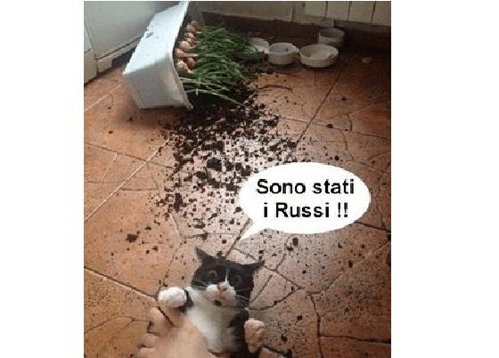 Gatto. sono -stati-i- russi