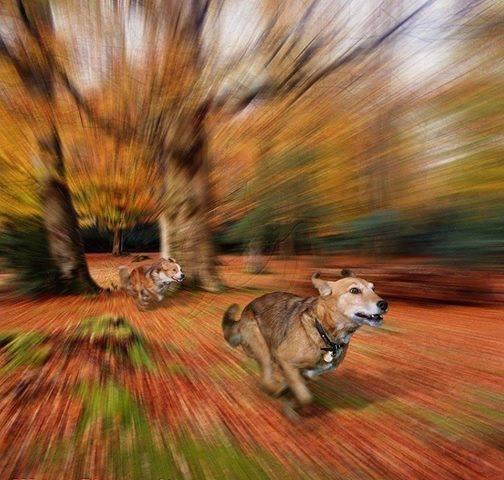Cani che corrono__01__